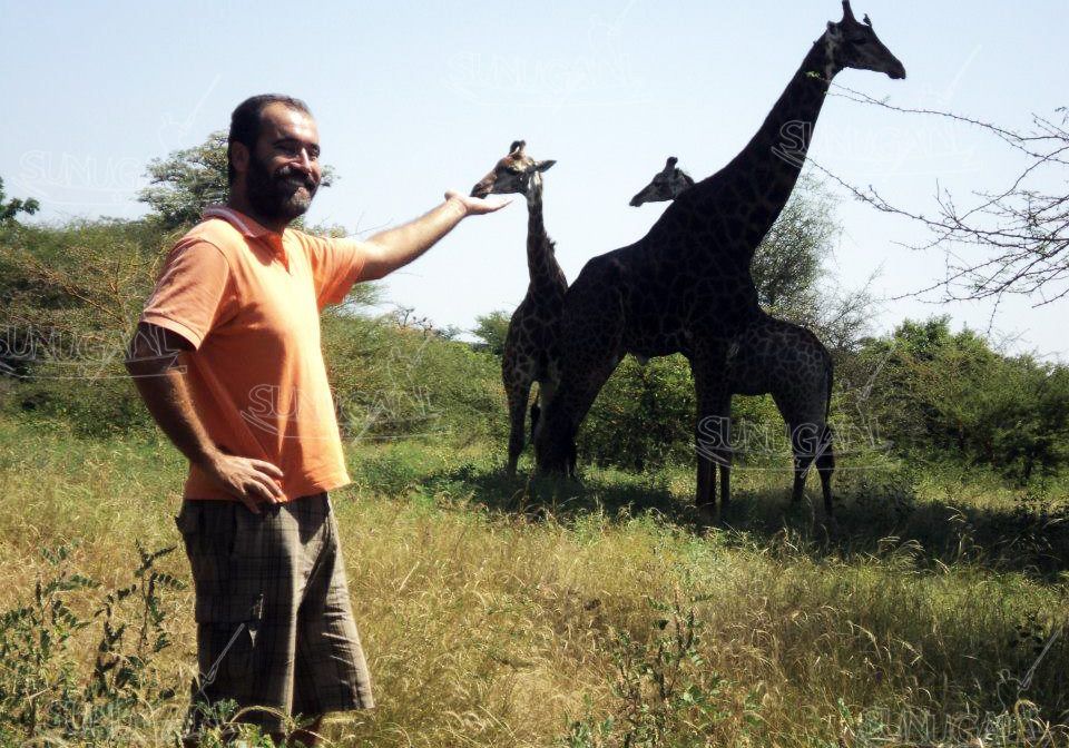 turista con giraffe copyright